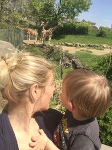 Watching the Giraffes