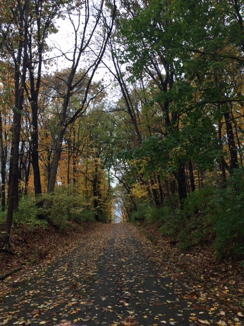 A gorgeous fall scene from one of my runs last week