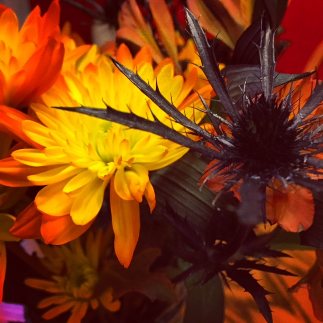 Halloween flowers from the hubby :)